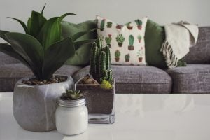 A cactus and two other house plants sit on top of the coffee table in the living room of a luxury house with modern themes and furniture | Luxury Homes by Brittany Corporation