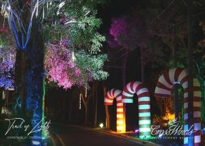 A night view of the Christmas festivities at the Pine Cone Trail at Crosswinds Tagaytay | Luxury Homes by Brittany Corporation