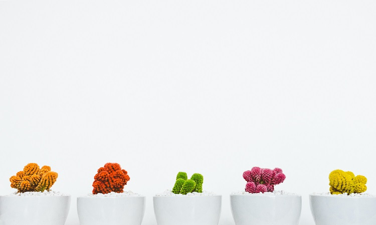 Different colors of cacti in white vases on a white background | Luxury Homes by Brittany Corporation