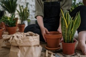 girl setting up indoor plants as her hobby at home in their luxury house as an eco-friendly lifestyle practice