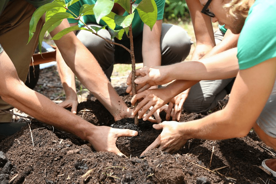 Western community of groups of white adults and teenagers planting a green leafy small tree baby plant together, into the brown fertile soil, with extended arms to show collaboration and helping each other to be eco-friendly