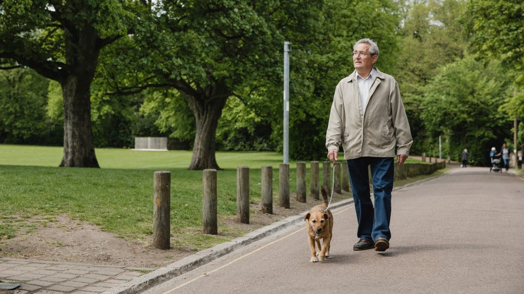 Old retired latin-american latino brown man with white gray hair in khaki long sleeves jacket, white collared polo shirt, blue denim jeans, and black loafers, walking his golden brown potcake aspin dog along the pavement road by the clean green grassy park with big old trees