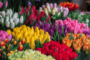 Bouquets of arranged colorful tulips bundled by color | Luxury Homes by Brittany Corporation