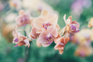 Orange orchids with purple lips growing in a bush can be an indication of the language of flowers | Luxury Homes by Brittany Corporation