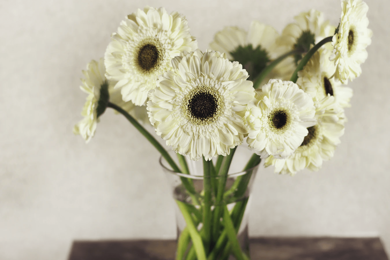 White gerbera daisies in a clear glass vase with water on a brown table indoors | Luxury Homes by Brittany Corporation