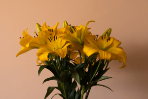 A vase of tall yellow lilies indoors | Luxury Homes by Brittany Corporation