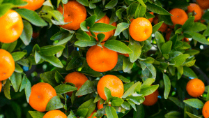 Oranges offer nutrients that can help you live a healthier lifestyle