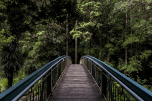 Bridge on the way to a pine tree forest | Luxury Homes by Brittany Corporation