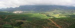 Minas Gerais Coffee Estate looks like Lausanne at Crosswinds | Luxury Homes by Brittany Corporation