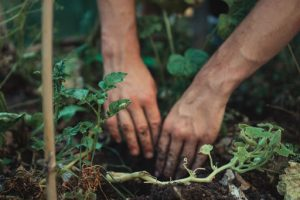 Man tending to soil to keep his plants healthy