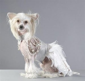 6.Couture Futuristic Royal Harness Dress on white expensive dog | luxury homes by Brittany Corporation