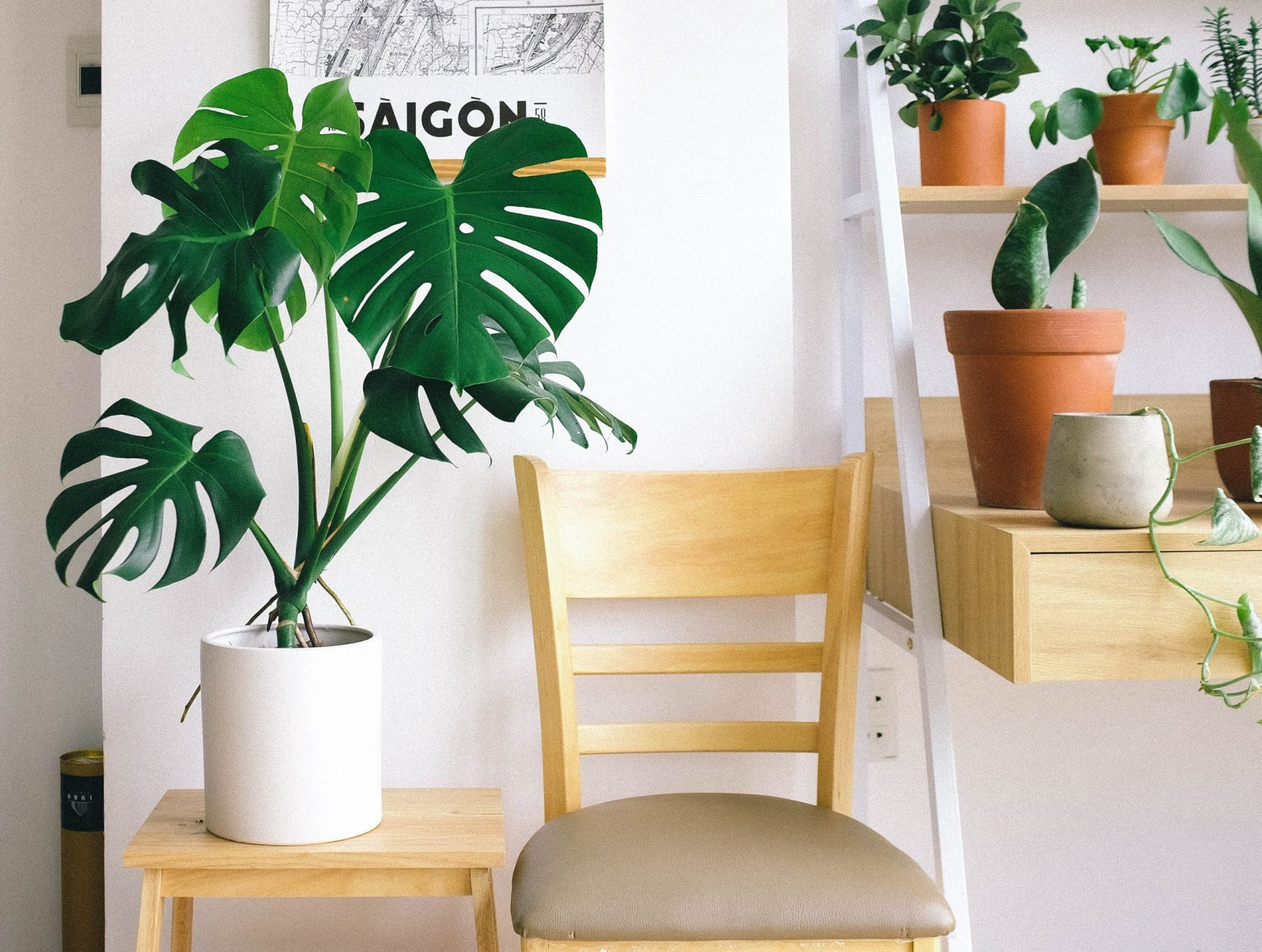 chair and plant in luxury condo | Luxury homes by brittany corporation