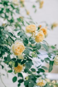 yellow luxury roses | luxury homes by Brittany Corporation