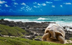 Galapagos | luxury homes by brittany corporation